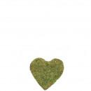 Heart Moss 20cm nature green